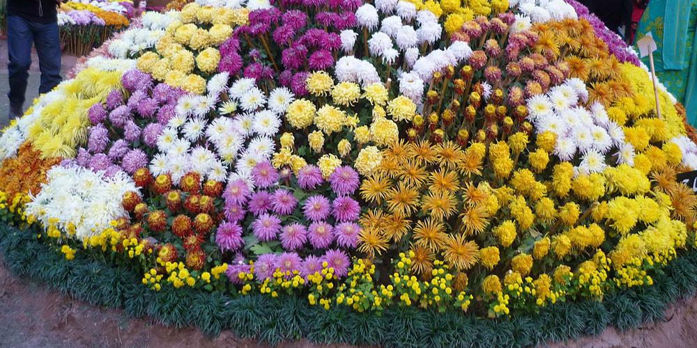 फूल प्रदर्शनीमा ३३ लाखको कारोवार